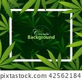 green cannabis leaf drug marijuana herb Background 42562184