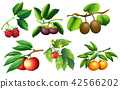 A set of fruit and branch 42566202
