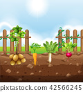A set of root vegetables 42566245