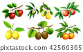 A set of fruit branch 42566365