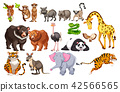 A Set of Wild Animals on White Background 42566565