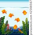 fish goldfish tank 42566567