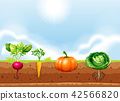 A set of vegetable and root 42566820