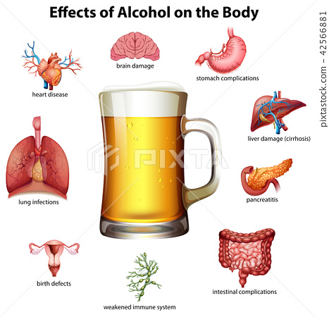 Effects of alcohol on the body 42566881