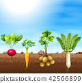 A set of root vegetable 42566899