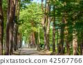 소나무 아키타 현 42567766