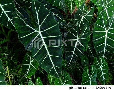 Tropical plant 42569419