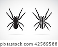 Vector of spider on white background. Insect. 42569566