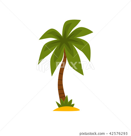 Tropical evergreen palm tree vector Illustration on a white background 42576293