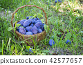 Plums in the wooden basket on green grass 42577657