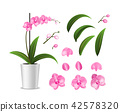 Realistic Detailed 3d Potted Tropical Orchid and Elements Petal, Stalk and Pot. Vector 42578320