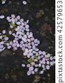 花瓣 水面 粉红 42579653