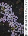 花瓣 水面 粉红 42579654