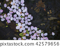 花瓣 水面 粉红 42579656