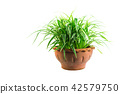 Green potted plant, trees in the cement pot 42579750
