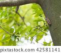 벌레, 곤충, 잎 42581141