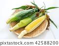 玉米 食品 原料 42588200