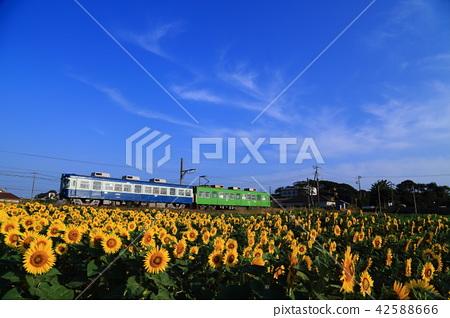 Choshi電鐵路,藍天和向日葵領域 42588666