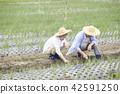 노인, 논밭, 농업 42591250