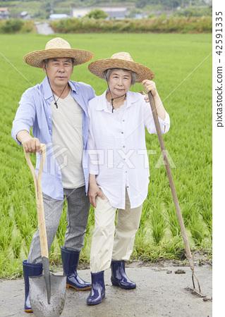 生活,老夫妻,韓國人 42591335
