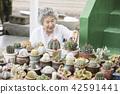 生活,老人,女性,韓國人 42591441