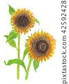 花朵 花 花卉 42592428