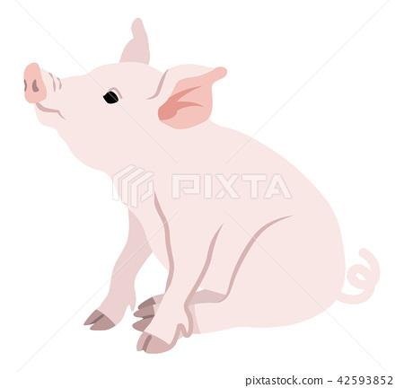 Pigs sitting 42593852