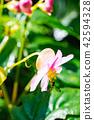亚洲台湾中国森林满月圆国家森林游乐区游乐园户外野外香菇生物昆虫蝴蝶毛毛虫蘑菇瀑布仙女瀑布满月圆瀑布 42594328