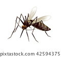 모기의 일러스트 42594375
