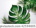 Tropical leaves background 42594605