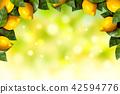 fresh fruit lemon 42594776