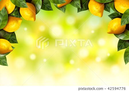 Lemon orchard frame 42594776