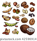 Nuts and bean seeds vector natural sketch 42596914