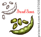 Bread beans vector sketch fruit 42597008