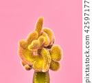cactus, minimal, art 42597177