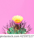 cactus, minimal, art 42597227