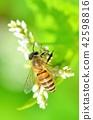 곤충, 벌레, 벌 42598816