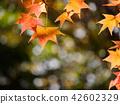 가을 단풍 42602329
