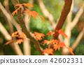 가을 단풍 42602331