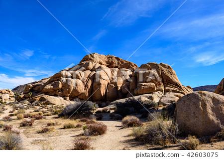 奇怪的岩石在約書亞樹國家公園,美國 42603075