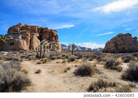 奇怪的岩石在約書亞樹國家公園,美國 42603085