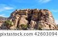 奇怪的岩石在約書亞樹國家公園,美國 42603094