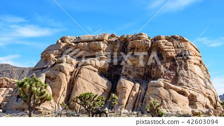 奇怪的岩石在约书亚树国家公园,美国 42603094