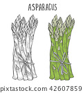 Hand drawn asparagus. 42607859