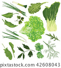 edible greens on a white background 42608043