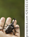 rhinoceros beetle, bug, summer image 42610213