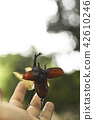 flying, rhinoceros beetle, copyspace 42610246