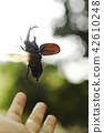 flying, rhinoceros beetle, copyspace 42610248