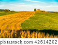 Natural landscape of hilly Tuscan field in summer  42614202