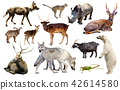 animal, collection, asia 42614580
